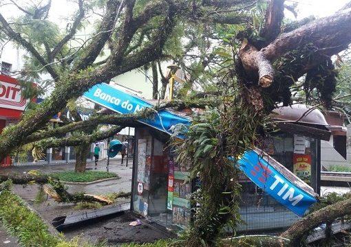 Banca árvore